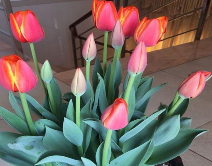 情人节到了该送什么颜色的花 第1张